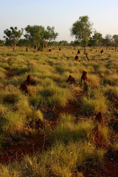 termitières - outback australie