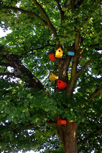 maisons oiseaux