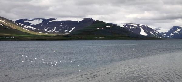Les alentours de Thingeyri